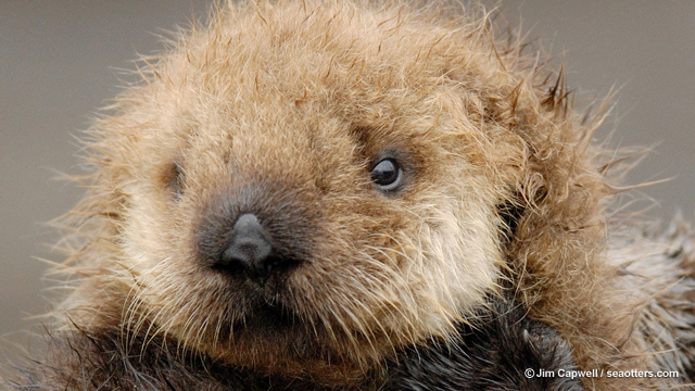 Making a Difference: The California Sea Otter Fund