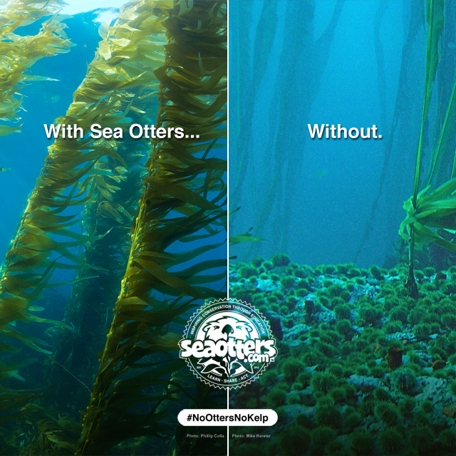No sea otters. No kelp forests.
